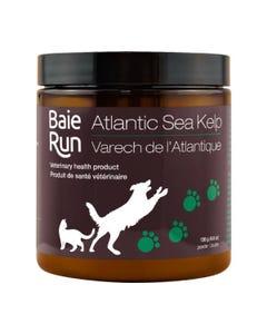 Baie Run Atlantic Sea Kelp
