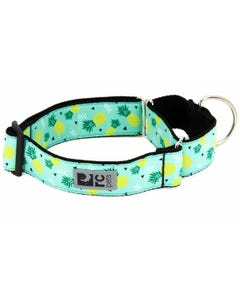 RC Pet All Webbing Training Collar - Pineapple Parade