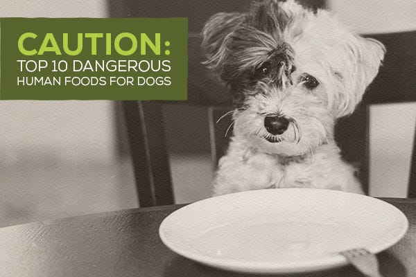 Caution: Top 10 Dangerous Human Foods for Dogs