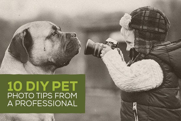 10 DIY Pet Photo Tips from a Professional
