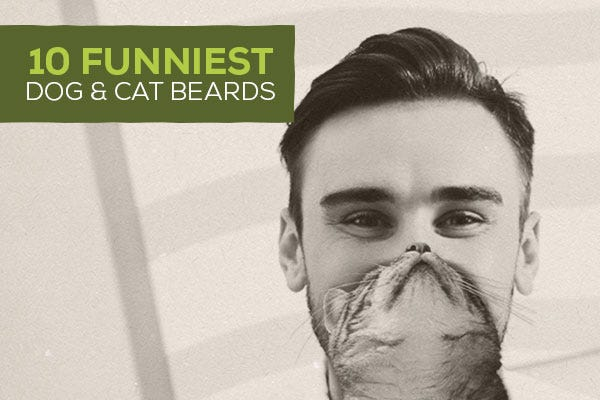 10 Funniest Dog and Cat Beards