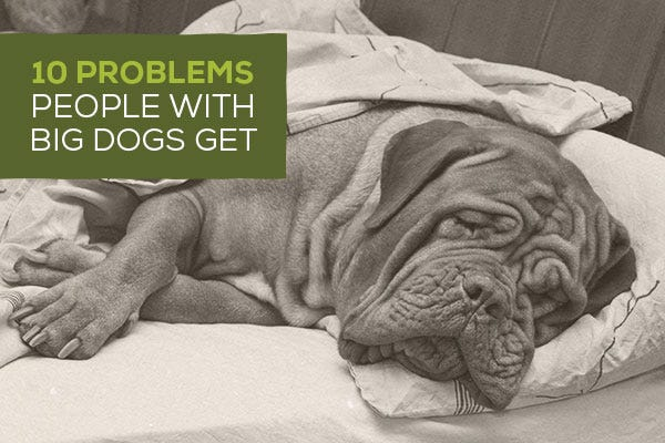 10 Problems People with Big Dogs Get