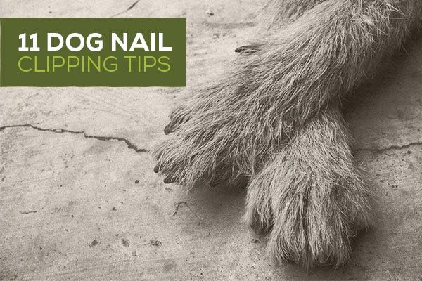 11 Dog Nail Clipping Tips