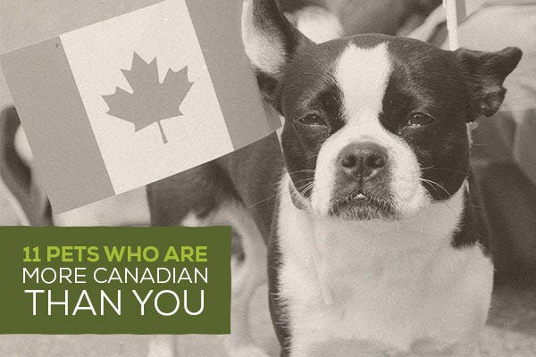 11 Pets Who Are More Canadian Than You