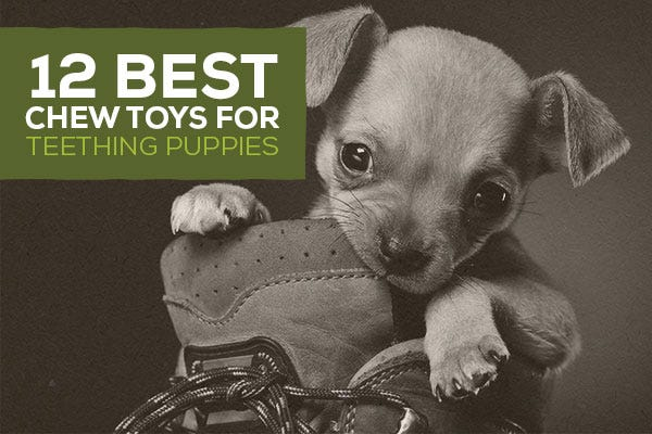 12 Best Chew Toys for Teething Puppies