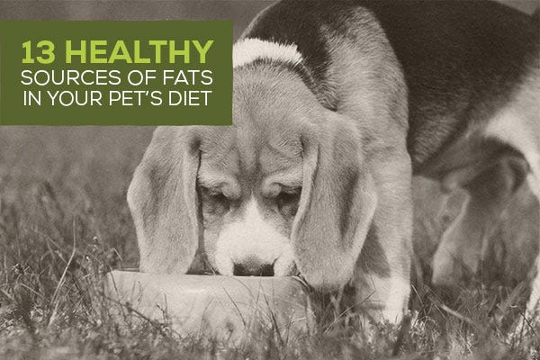 13 Healthy Sources of Fats in Your Pet's Diet