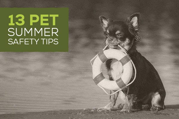 13 Pet Summer Safety Tips