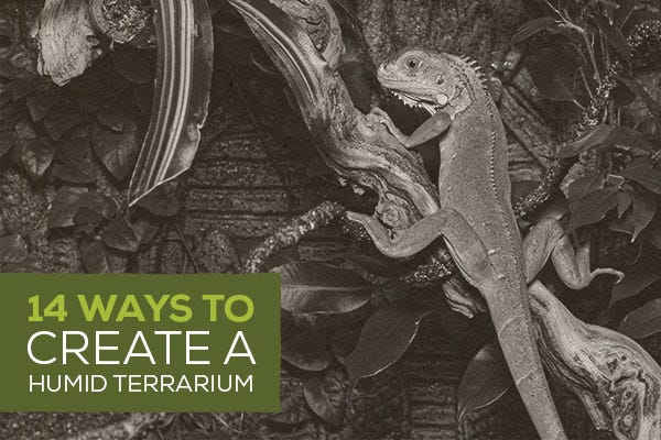 14 Ways to Create a Humid Terrarium