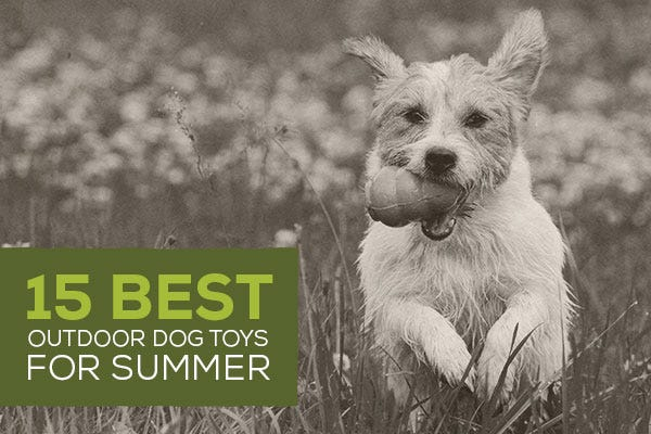 15 Best Outdoor Dog Toys for Summer