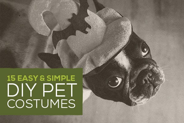15 Easy & Simple DIY Pet Costumes