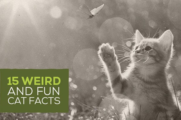 15 Weird and Fun Cat Facts