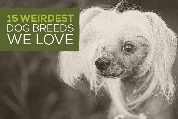15 Weirdest Dog Breeds We Love