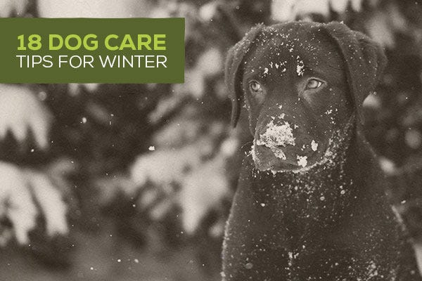 18 Dog Care Tips for Winter