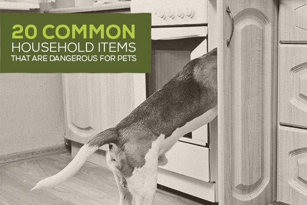 20 Common Household Items That Are Dangerous For Pets