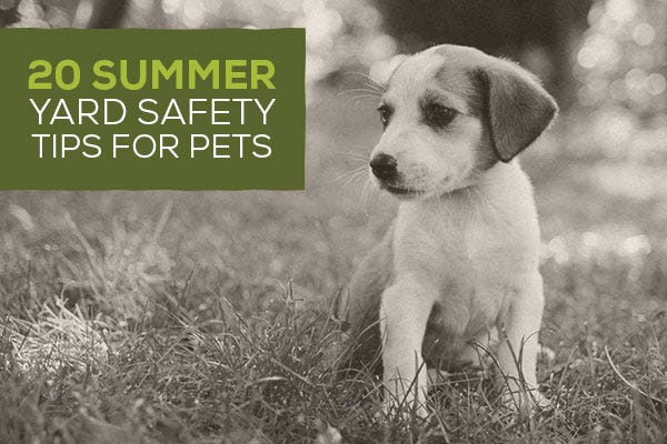 20 Summer Yard Safety Tips for Pets