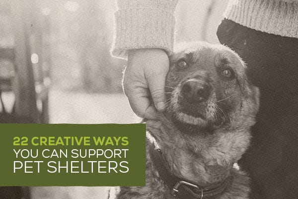 22 Creative Ways You Can Support Pet Shelters