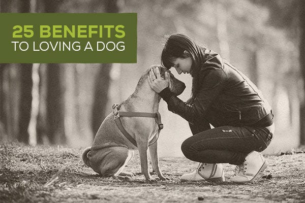 25 Benefits to Loving a Dog