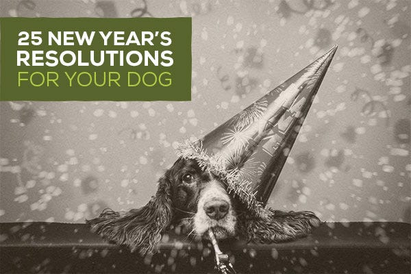 25 New Year's Resolutions For Your Dog