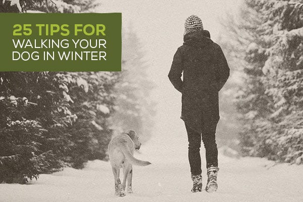 25 Tips for Walking Your Dog in Winter