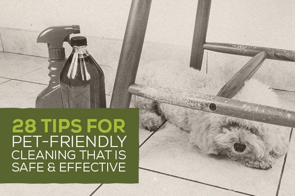28 Tips for Pet-Friendly Cleaning that Is Safe & Effective