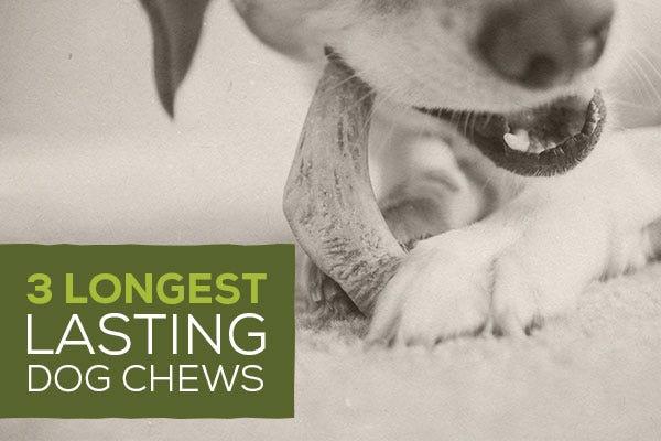 3 Longest Lasting Dog Chews