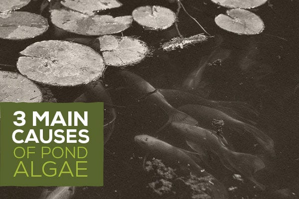 3 Main Causes of Pond Algae