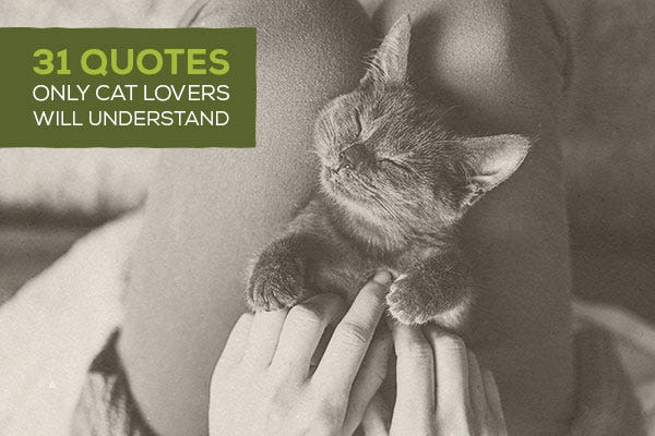 30 Quotes Only Cat Lovers Will Understand
