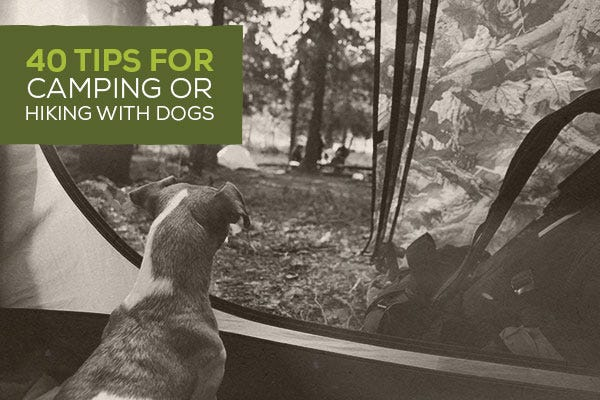 40 Tips for Camping or Hiking with Dogs
