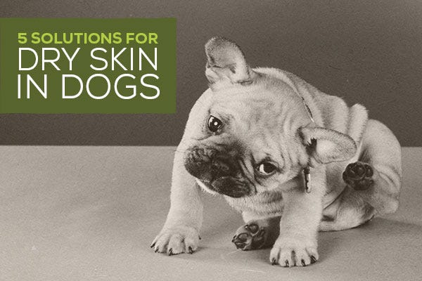 5 Solutions for Dry Skin in Dogs