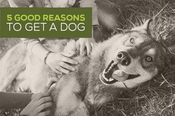 5 Good Reasons to Get a Dog