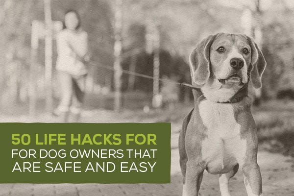 50 Life Hacks for Dog Owners That Are Safe and Easy
