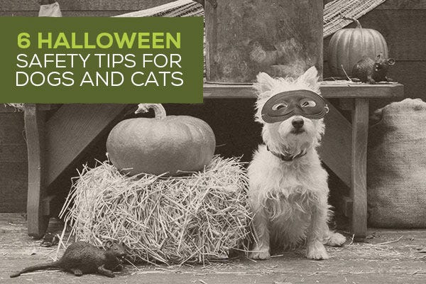6 Halloween Safety Tips for Dogs and Cats