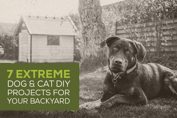 7 Extreme Dog & Cat DIY Projects for Your Backyard