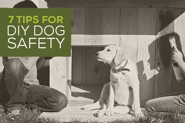 7 Tips for Dog DIY Safety