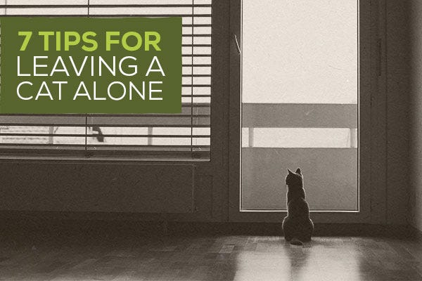 7 Tips for Leaving a Cat Alone