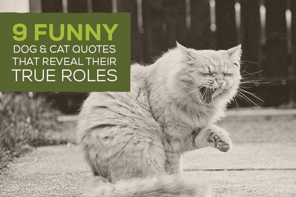 9 Funny Dog & Cat Quotes that Reveal Their True Roles