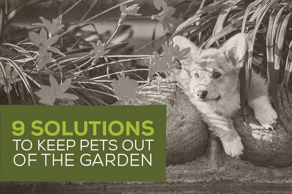 9 Solutions to Keep Pets out of the Garden