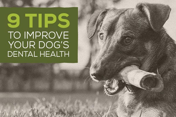 9 Tips to Improve Your Dog's Dental Health