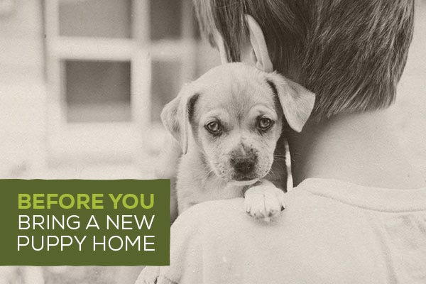 Before You Bring a New Puppy Home