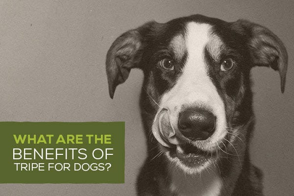 What Are the Benefits of Tripe for Dogs?