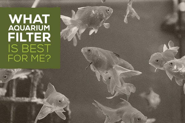 What Aquarium Filter is Best for Me?