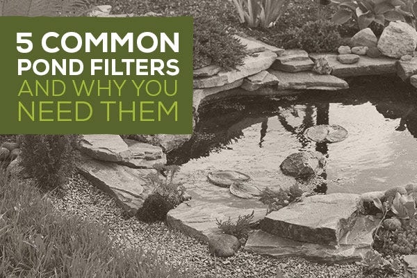 5 Common Pond Filters And Why You Need Them