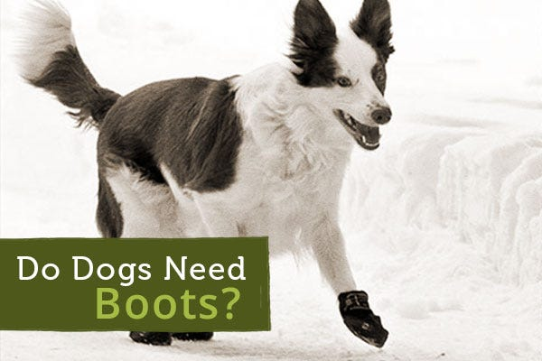 Do Dogs Need Boots?