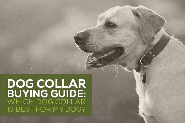 Dog Collar Buying Guide: Which Dog Collar is Best for My Dog?
