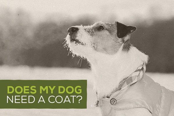Does My Dog Need A Coat?