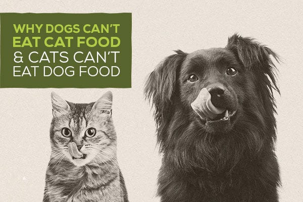 Why Dogs Can't Eat Cat Food and Cats Can't Eat Dog Food