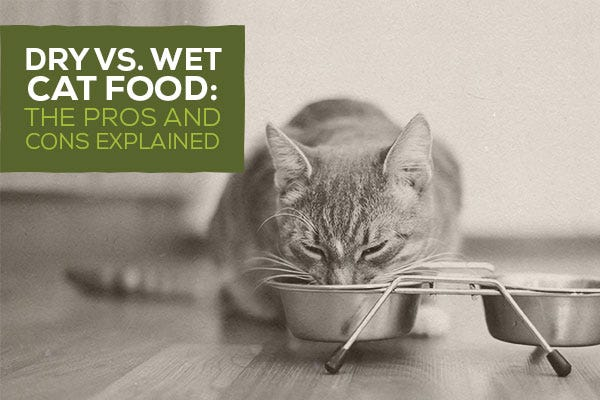 Pros And Cons Of Cats vs. wet cat food: the pros and cons explained