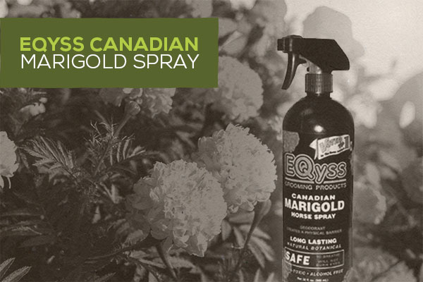 Eqyss Canadian Marigold Spray: Natural Pet Moisturizer