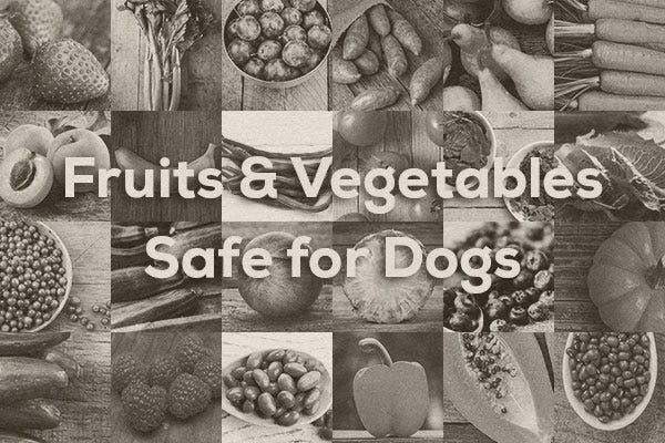 Fruits and Vegetables Safe for Dogs