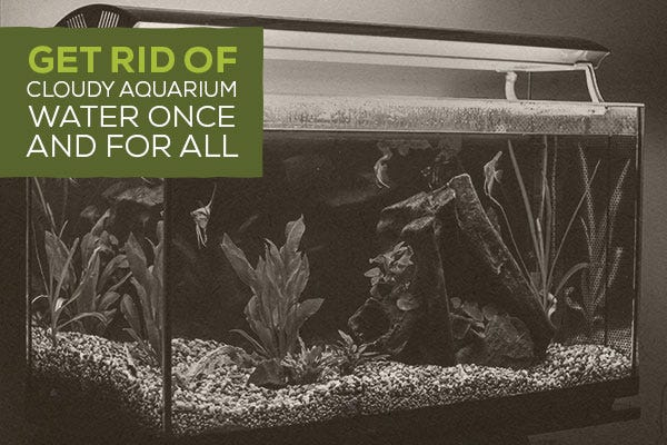Get rid of cloudy aquarium water once and for all for Foggy fish tank
